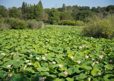 L'étang de Mougins